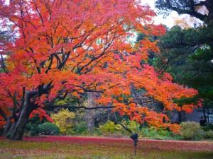 六義園の紅葉の見ごろとアクセス情報
