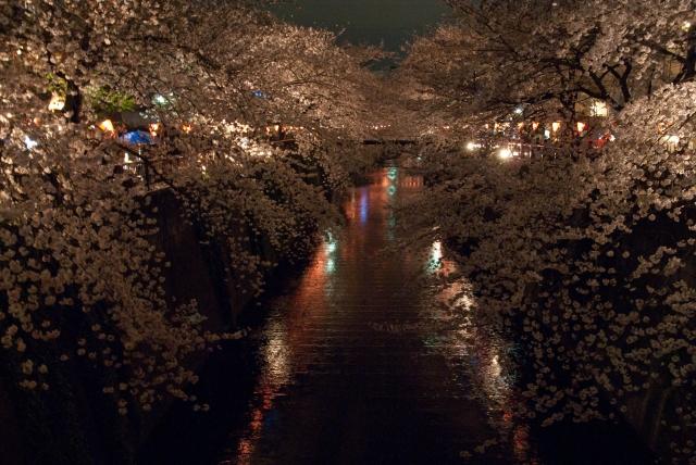 目黒川の夜桜を屋台・レストランで楽しむ!ライトアップはある?